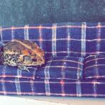 кресло и жаба
